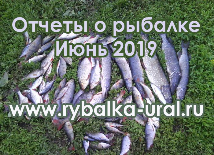 otchety_06_19_2019-05-31.jpg